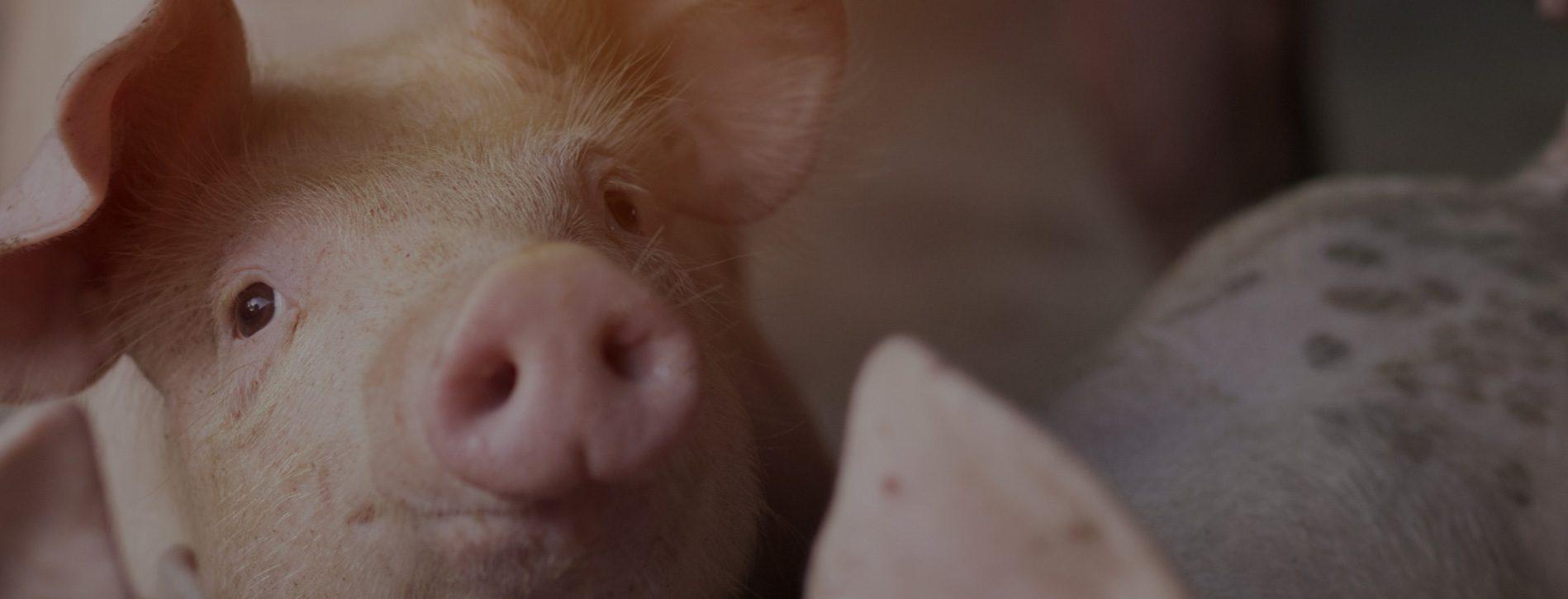 Nutritec SAS - Nutrición y Salud Animal - Cali, Colombia