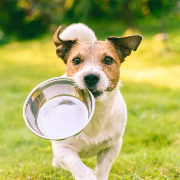 Caninos Vitaminas y Minerales Nutritec