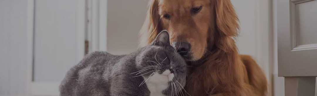Nutritec Mascotas