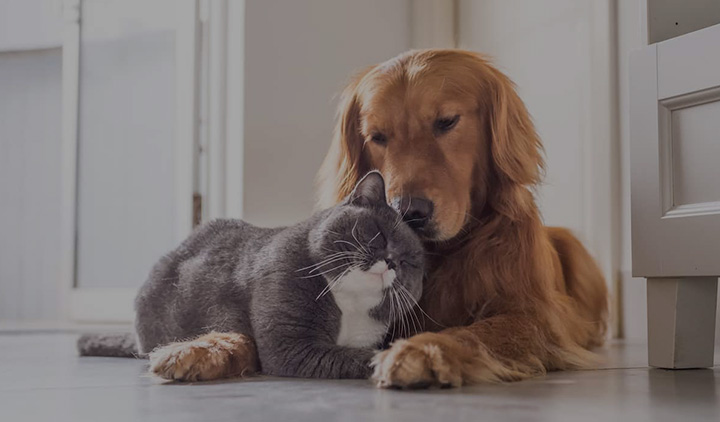 Nutrictec - Mascotas